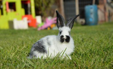 Rabbit in grass field
