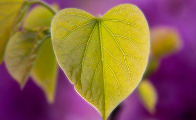 Green leaf, heart shape, macro