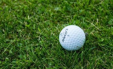 Golf ball in grass field