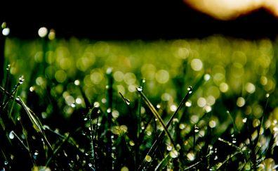 Green Grass, bokeh, morning sun
