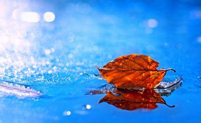Leaf of fall, close up