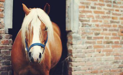 Horse, brown animal, wall