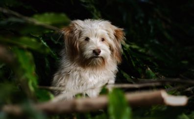 Dog, furry animal, muzzle