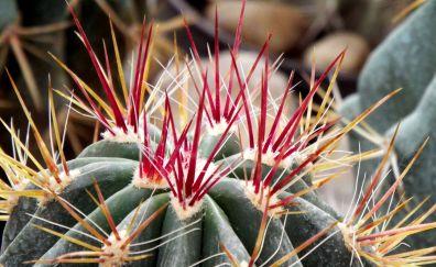 Cactus flower thorns close up