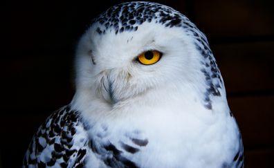 White owl, bird, muzzle