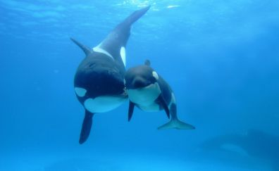 Whale, baby fish, fish, underwater