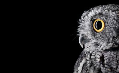 Owl, muzzle, eyes, predator, 4k, 5k