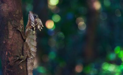 Lizard, tree trunk, bokeh, reptile