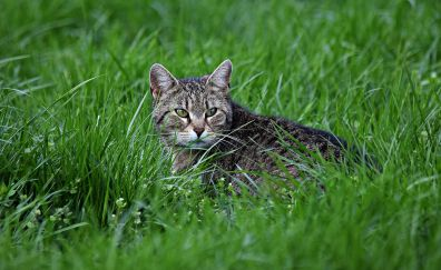 Cat in grass field, sitting, grass, pet animal