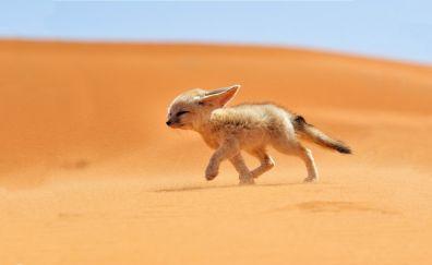 Cute little fox running in the desert