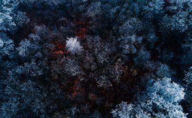 Ariel view, forest, snow frost, winter, nature