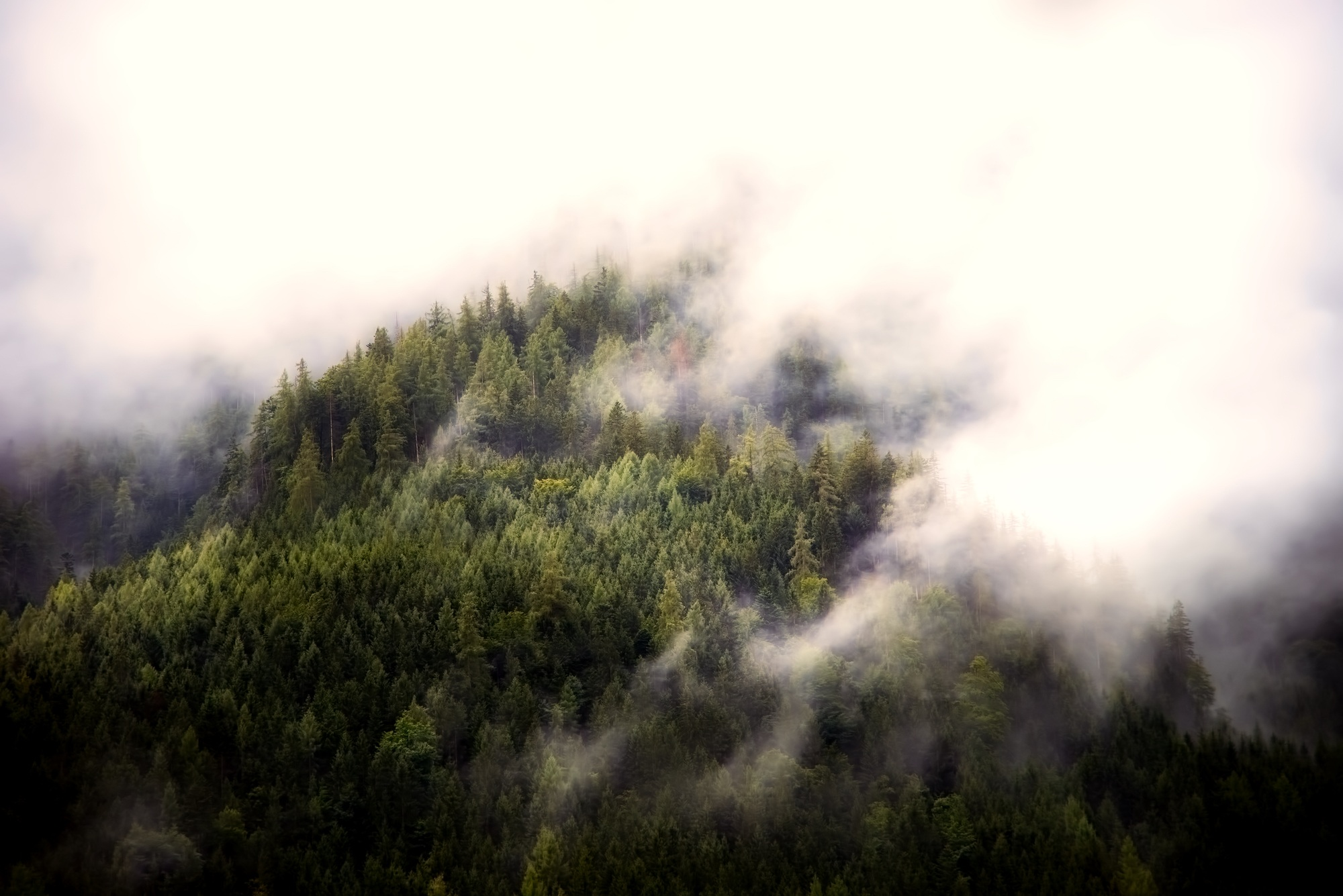 Fog, aerial view, forest, nature, trees